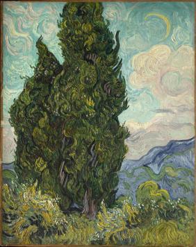 Cypresses[1]