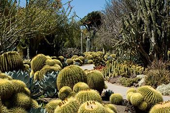 Desert-Garden_350