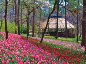 Garvan Gardens Shot
